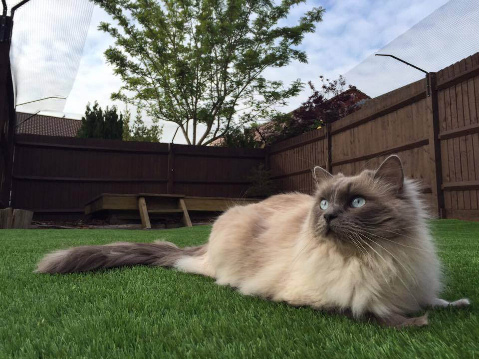 Protectapet Work Hard To Help Save Cats As Croydon Cat
