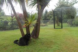 Cat-Enclosure