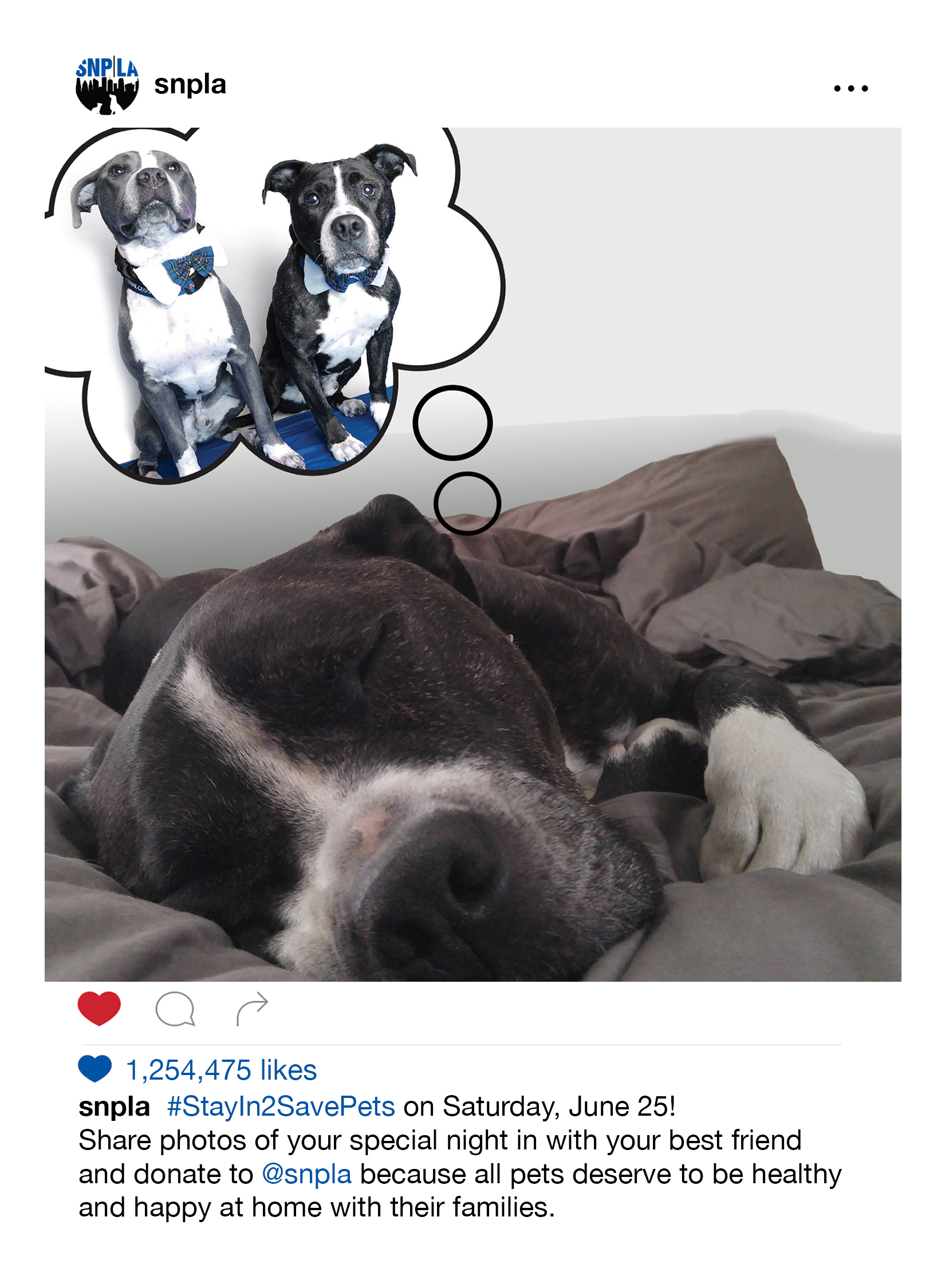 spay neuter project la Los angeles, ca (prweb) june 16, 2016 -- the spay neuter project of los angeles (better known as snp la) is excited to announce the 2nd annual #stayin2savepets.