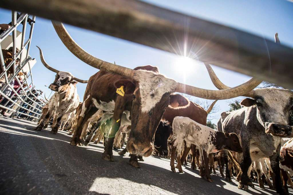 Rough And Tumble >> Chisholm Trail Countdown to Abilene, Kansas, Labor Day Longhorn Event, September 2 - 4, 2016