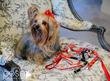 Made in Los Altos specialty dog collars sold at Enchante Boutique Hotel