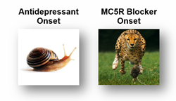 Speed of Onset in Animal Models