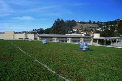 Korematsu Green Roof