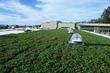 Korematsu Living Roof