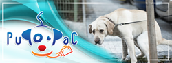 The PuPooPac is a pet invention which every pet owner will appreciate having on hand.
