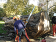 A 60″ chainsaw bar was necessary to make cuts through the logs.