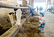 Ski Vermont Donates $19,000 to Preserve Local Dairy Farms & Promote Tourism