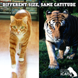 Cole & Marmalade: Different Size Same Catitude
