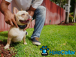 Wearable Pet Tech Reaching New Heights: Halo Collar Releases the First True Smart Pet Collar Allowing Owners to Connect with Their Pets