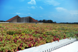 LiveRoof Green Roofs Help Montgomery County Public Schools Set the Gold Standard for Green Schools