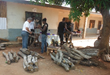 Inoculating logs for shiitake log research project at Bemcom, Ghana, West Africa