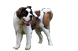 AccountingSuite Brings the Saint Bernard to the Big Apple
