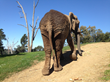 Oakland Zoo Contributes to Newly Published Collection of Scientific Research on Zoo Elephant Welfare, Care