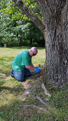 Giroud Tree and Lawn donates treatment to protect iconic and massive Ash Tree at Bucks County Audubon Society from deadly Emerald Ash Borer.