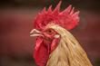 Bird-X Blog Reports Mammals Can Carry Avian Flu, Too