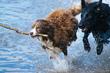 InsuredPet.net Helps Keep Pets Healthy this Summer