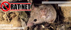 Rat net is a household  invention that is affordable, readily available, easy to use, and is incredibly efficient at what it does.