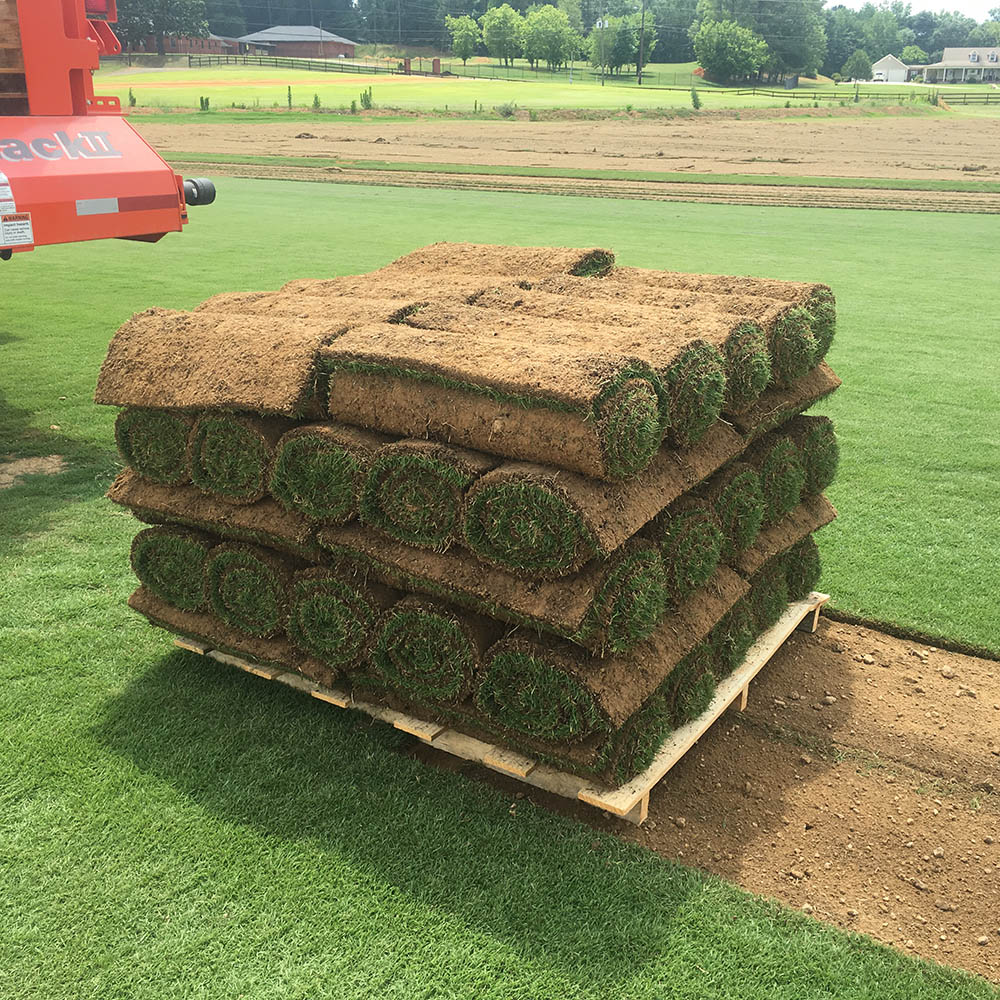 Super Sod Expands Inventory To Include Zeon Zoysia Sod