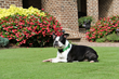 Zeon Lawn Dog