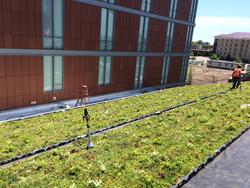 CMU Green Roof