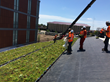 Green roof install crew