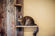 Eco Cat Furniture Introduces a Line of Environmentally Friendly, Socially Responsible Cat Furniture