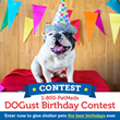 1-800-PetMeds Cares™ DOGust Birthday Contest Celebrates Shelter Dog Birthday with Sponsored Adoption Fees