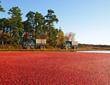 New Jersey ranks in the top five nationally for total production of cranberries, bell peppers, spinach, and blueberries.