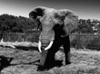 Celebrate World Elephant Day at Oakland Zoo this Friday​