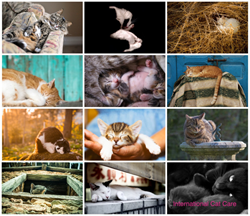 icatcare photo competition winners
