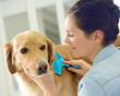 DakPets Announces Release of Professional Quality Pet Grooming Slicker Brush for No Mess and No Stress Pet Grooming