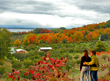 """Traverse City Tourism to Offer Value-Driven """"Fab Fall"""" Vacations Packages"""