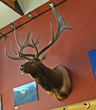 The Plute Bull—Former World Record Elk Antlers To Be Offered At Auction