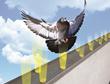 Bird Barrier Introduces Optical Gel™