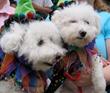 Bark in the Park San Jose Dogs