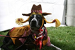 Dog Costume Contestant
