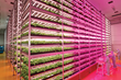 Sustainable Indoor Growing on the Rise Reducing Carbon Footprint