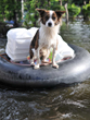 Join the Wags Club in Helping Louisiana Flood Victims This September, Los Angeles Dog Daycare Takes Action to Affect Positive Change