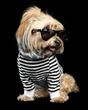 "TurnStyle Hosts Four-Legged ""Fashion Week"" Show Tuesday, September 13, 3 p.m. to 4 p.m."