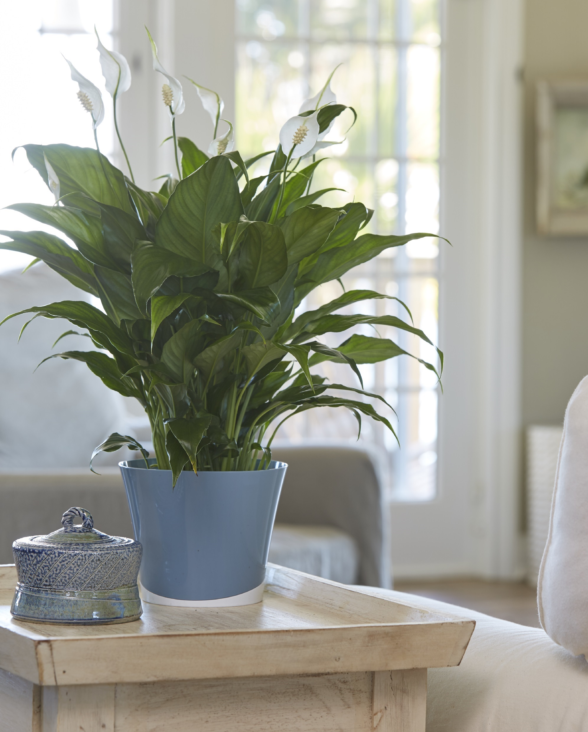 New Study Highlights Reasons To Celebrate Indoor Plant