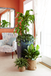 New Study Highlights Reasons to Celebrate Indoor Plant Week with Costa Farms