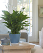 To bring attention to the new research and many health benefits of indoor plants, Costa Farms celebrates National Indoor Plant Week the third week of September.