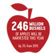 Apple Season Is Here! U.S. Apple Association Forecasts a Stronger Than Average Harvest