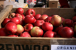 GoBRT's Picks the Top September Apple Picking and Festivals for the Kids Trail