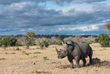 """African Travel, Inc.'s Numerous Partnerships Celebrate """"World Rhino Day"""" Every Day"""