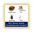 Fall into a Pest Proofing Routine