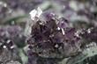 minerals, crystals, art, jewelry, amethya.com