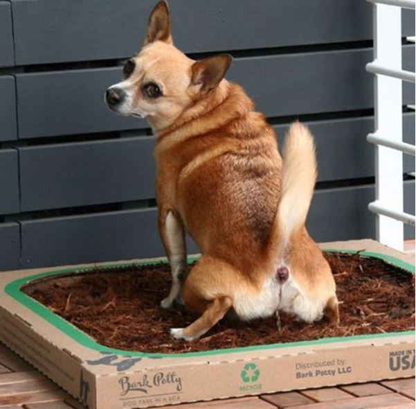 bark potty adds new feature to their product creating an