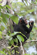 "Oakland Zoo's ""Discovering Primates"" Benefit for Chimpanzees of the Budongo Forest"