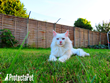British Company ProtectaPet Propose Innovative Cat Fencing is a Better Solution than Keeping Cats Indoors